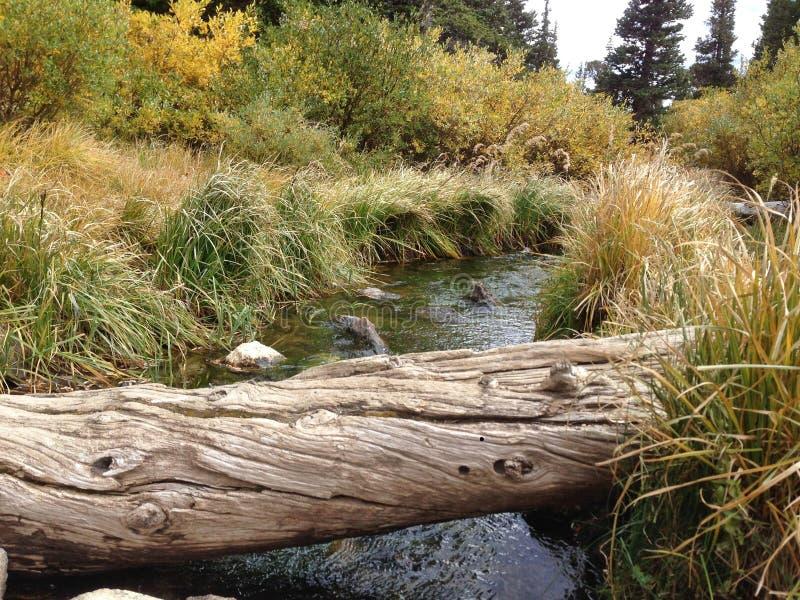 在小河的下落的树 免版税库存图片