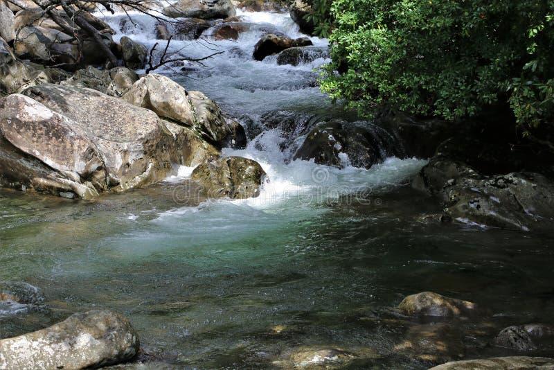 在小河的冲的水在伟大的Smokey山国立公园 库存照片