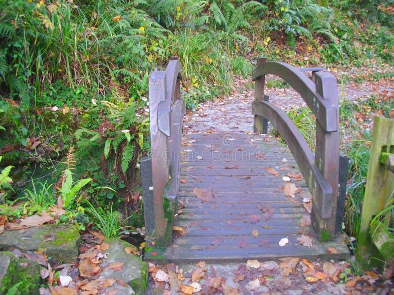 在小河的小,被环绕的木桥通过森林地 库存照片