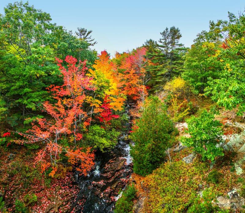 在小河的明亮的秋叶在阿科底亚国家公园 免版税库存图片