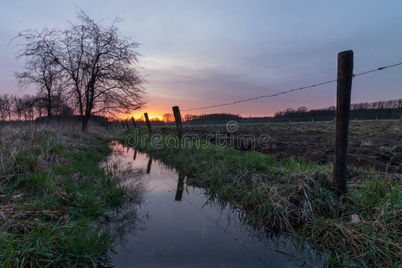 在小河的树在日落 库存图片