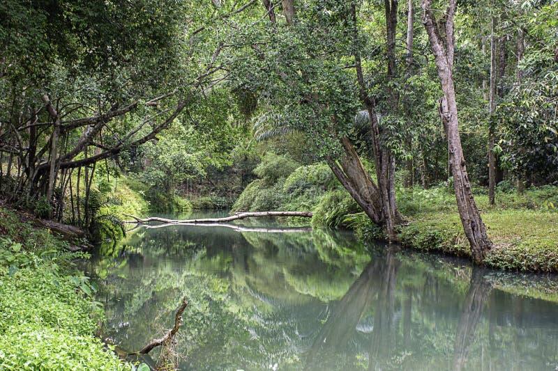在小河的水是绿色和鲜绿色的树在Kapao瀑布国立公园,Chumphon在泰国 库存图片
