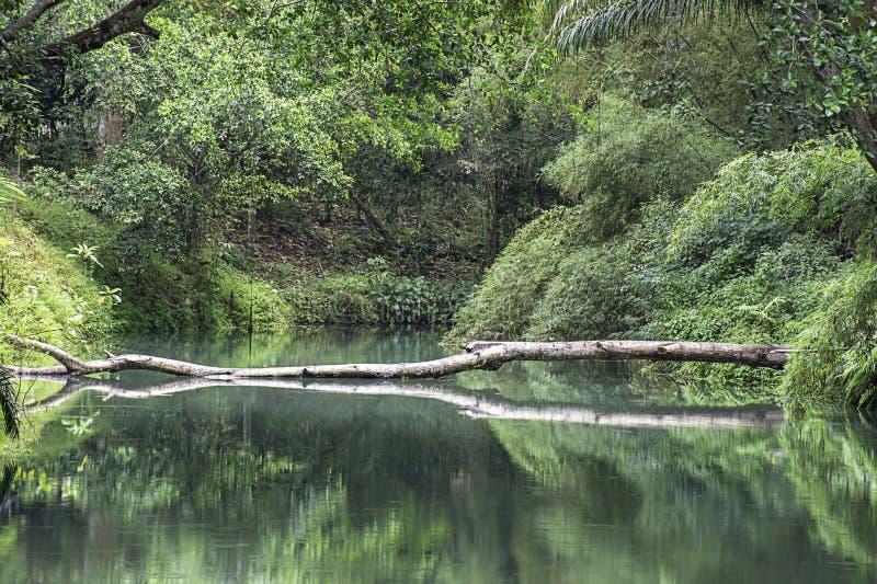 在小河的水是绿色和鲜绿色的树在Kapao瀑布国立公园,Chumphon在泰国 图库摄影
