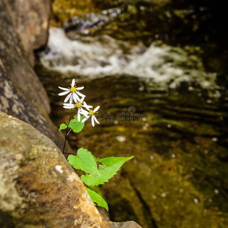 在小河附近的野花 免版税库存照片