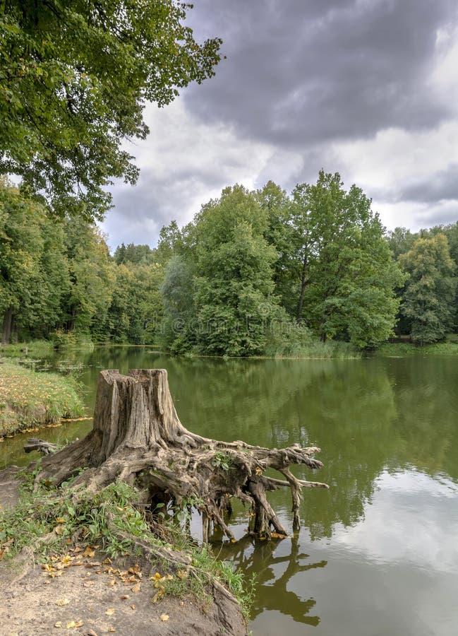 在小湖岸的树桩  库存照片