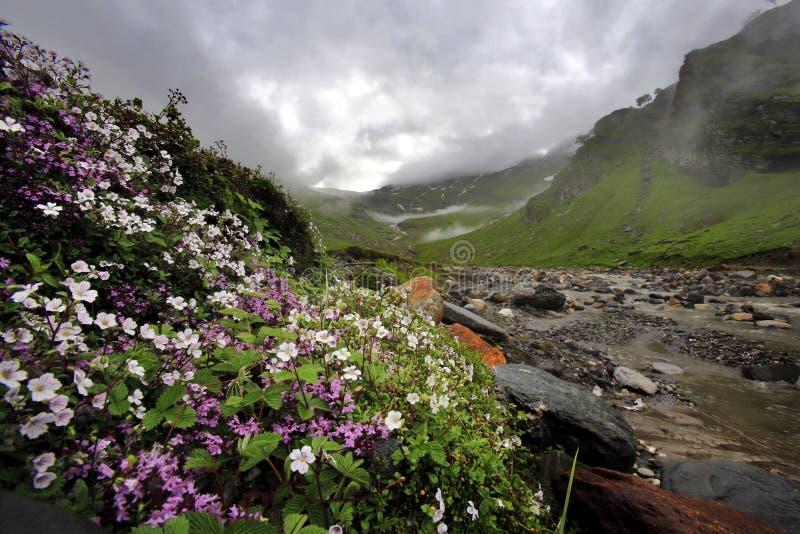 在小溪(小河)附近的野花在Northe的山谷的 库存照片