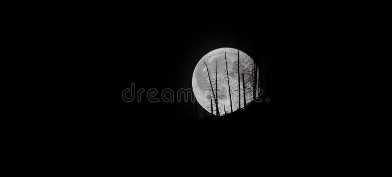 在小瀑布的令人毛骨悚然的月亮,华盛顿州 免版税库存照片