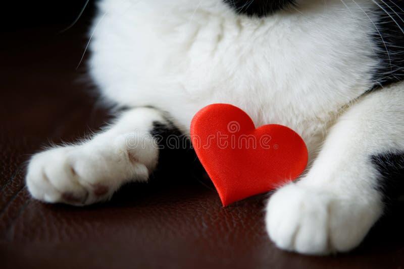在小猫的爪子的明亮的红心 祝贺在华伦泰` s天 免版税库存照片