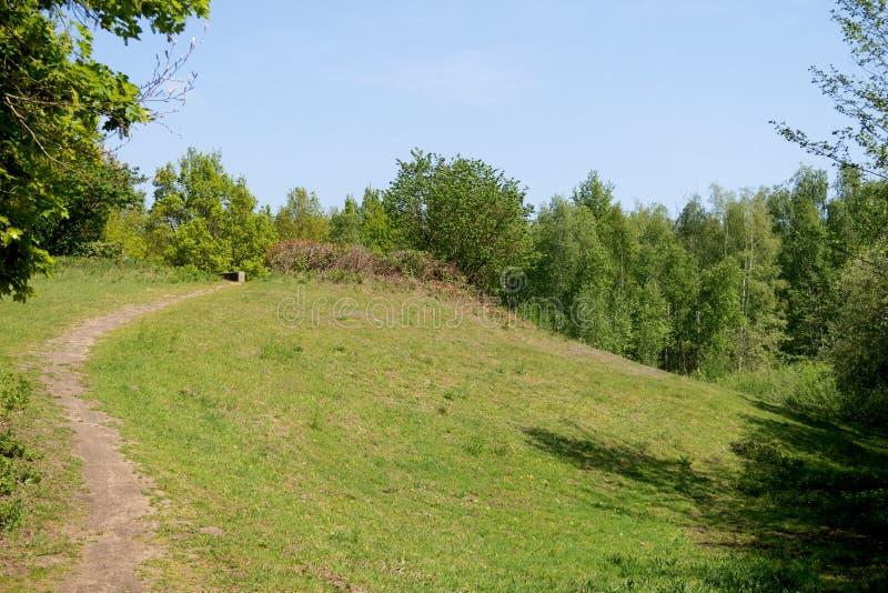 在小的小山的看法在geeste emsland的德国一个森林里 免版税库存图片