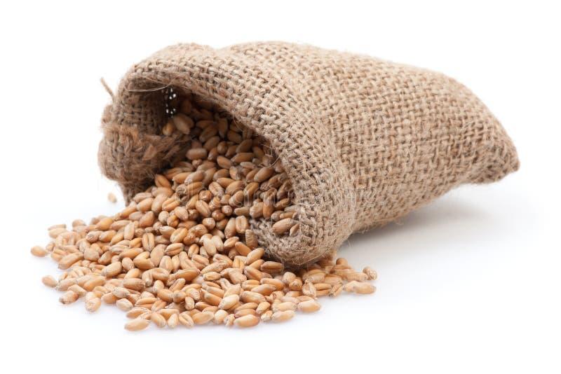 在小的粗麻布大袋的种子 免版税库存图片