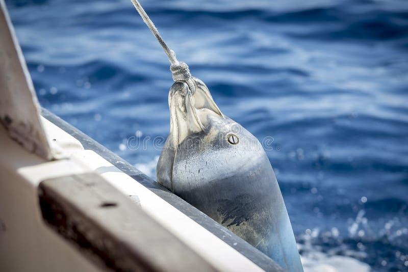 在小船的防御者 免版税库存照片