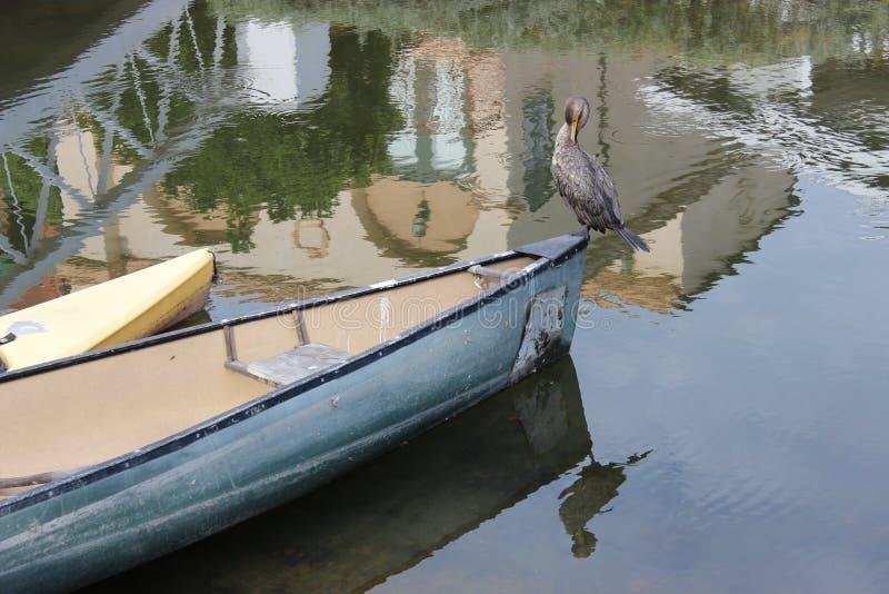在小船的鸟 免版税图库摄影