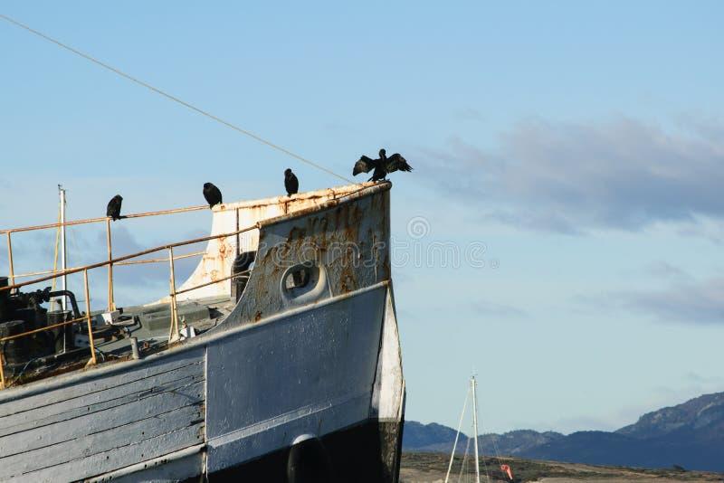 在小船的鸟 图库摄影