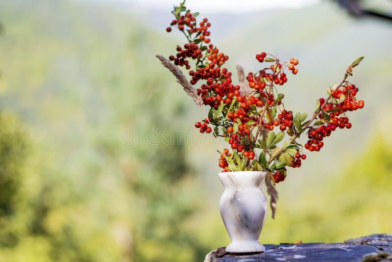 在小花瓶的美丽的红色秋天花 库存照片