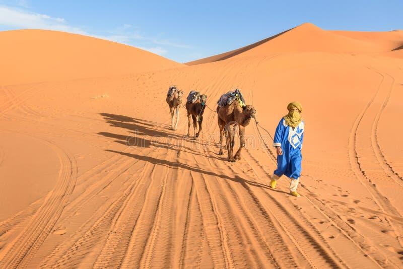 在尔格Chebbi沙丘的巴巴里人人主导的骆驼有蓬卡车在Merzouga,摩洛哥附近的撒哈拉大沙漠 免版税库存照片