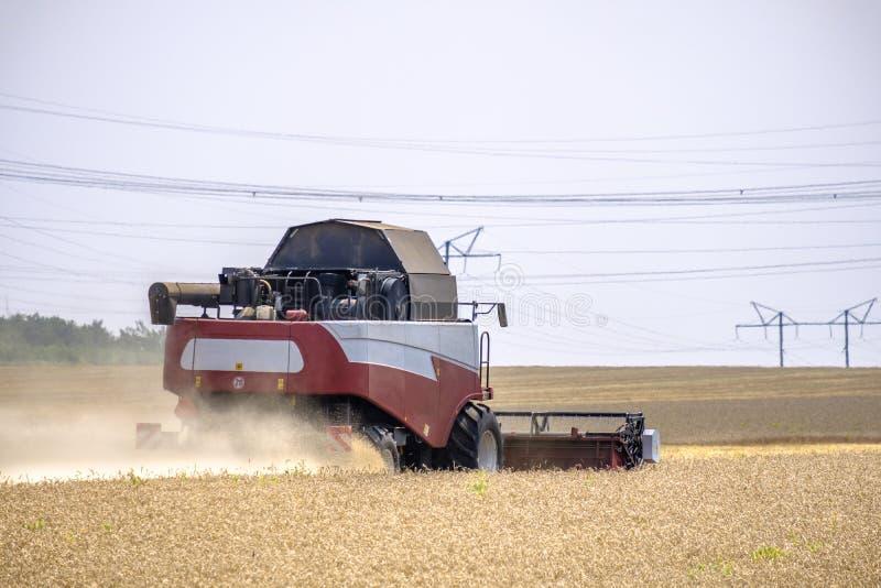 在尘土俱乐部的收割机在麦子收获的工作在一个巨大的领域的在夏天 因此,面包诞生发生 免版税库存图片