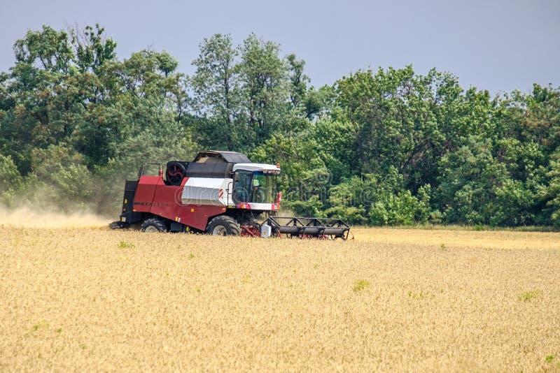 在尘土俱乐部的收割机在麦子收获的工作在一个巨大的领域的在夏天 因此,面包诞生发生 免版税库存照片