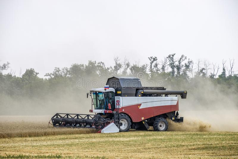 在尘土俱乐部的收割机在麦子收获的工作在一个巨大的领域的在夏天 因此,面包诞生发生 图库摄影