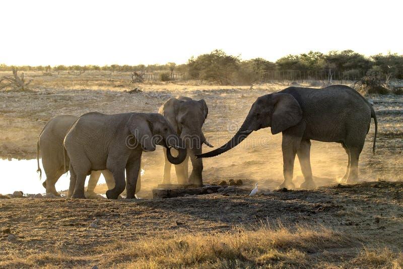 在尘土的大象 库存照片