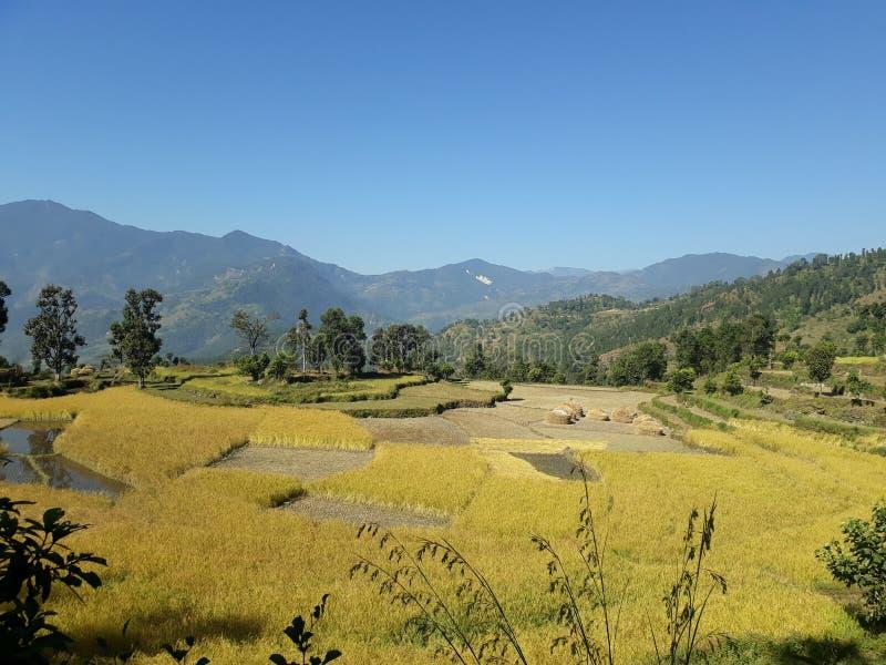 在尼泊尔的小山的肥沃农业领域 免版税库存照片