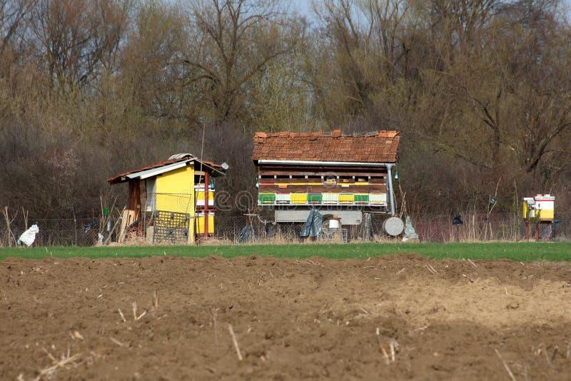 在局部域的五颜六色的蜂箱围拢与铁丝网和草与土壤在前面和密集的森林里在背景中 库存照片