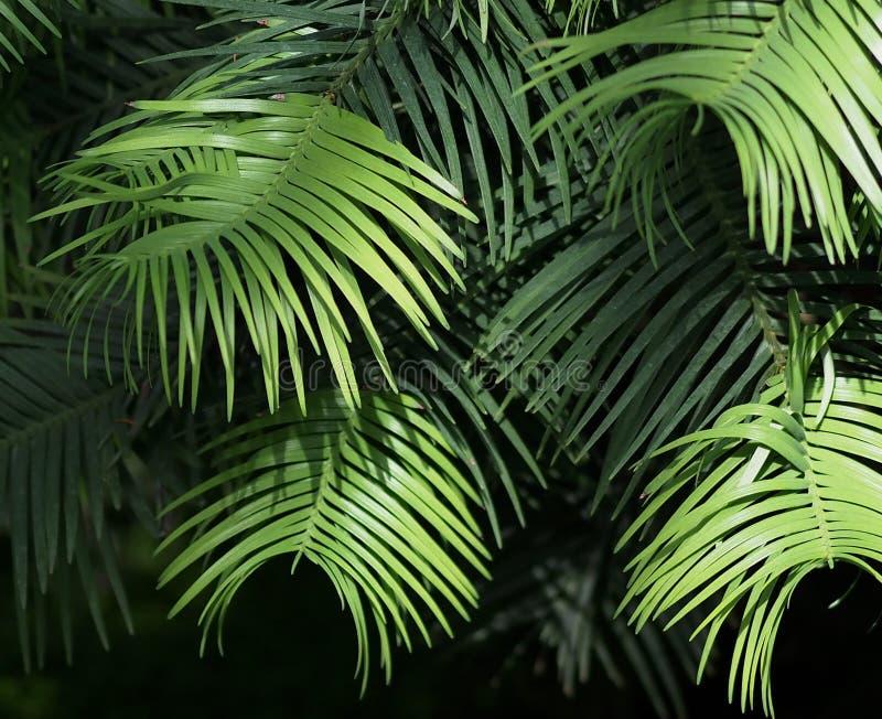 在层数的绿色叶子 库存图片