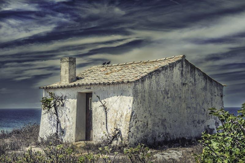 在屋顶的乌鸦 免版税库存照片
