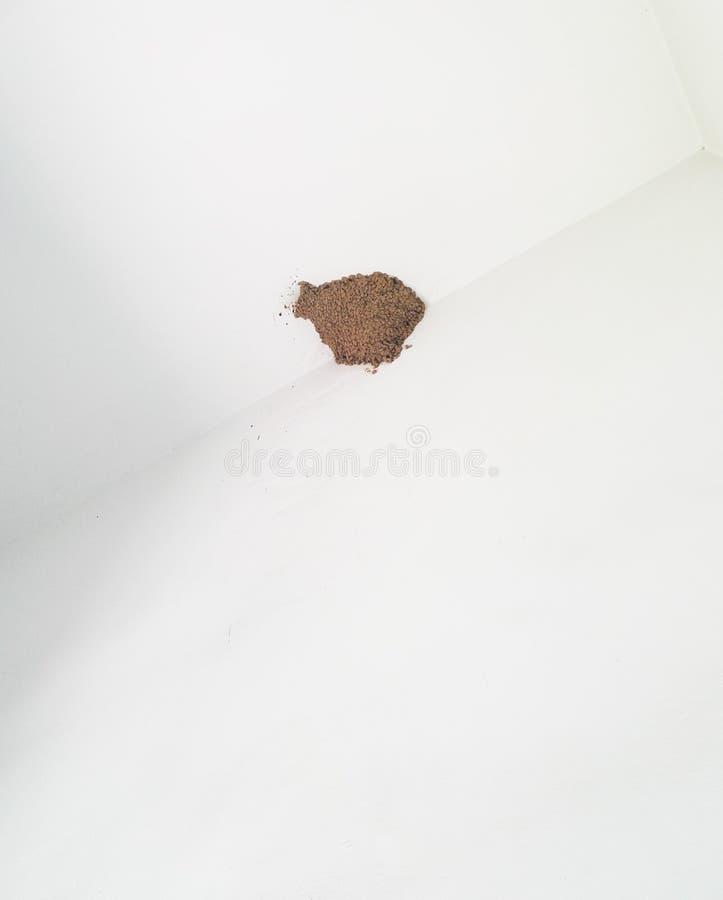 在屋顶的燕子巢 图库摄影