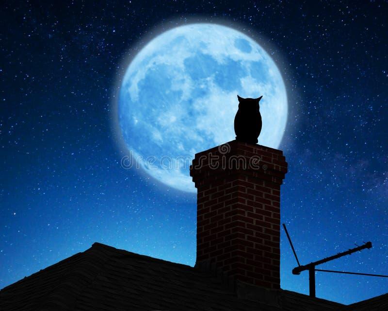 在屋顶的猫头鹰 免版税图库摄影