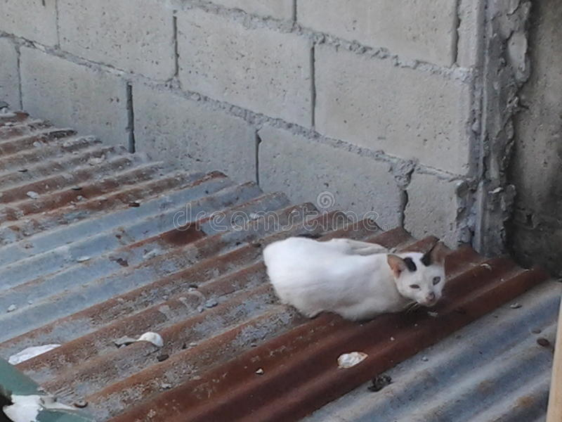 在屋顶的猫 图库摄影