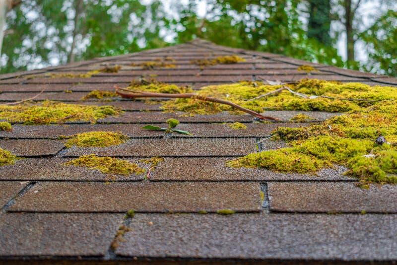 在屋顶的青苔 免版税库存照片