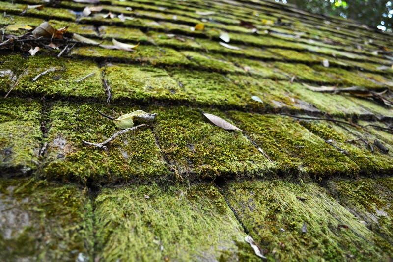 在屋顶的青苔 免版税图库摄影