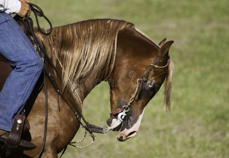 在展示期间的被驯化的马 免版税库存照片
