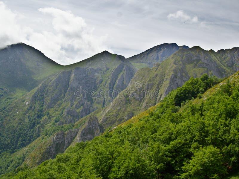 在山一边的叶茂盛春天森林 免版税库存照片