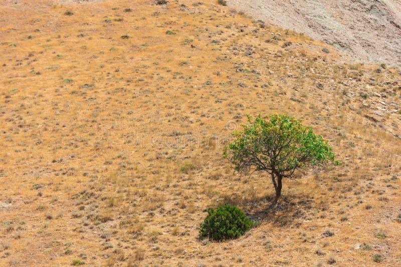在山上面的偏僻的树 免版税库存照片