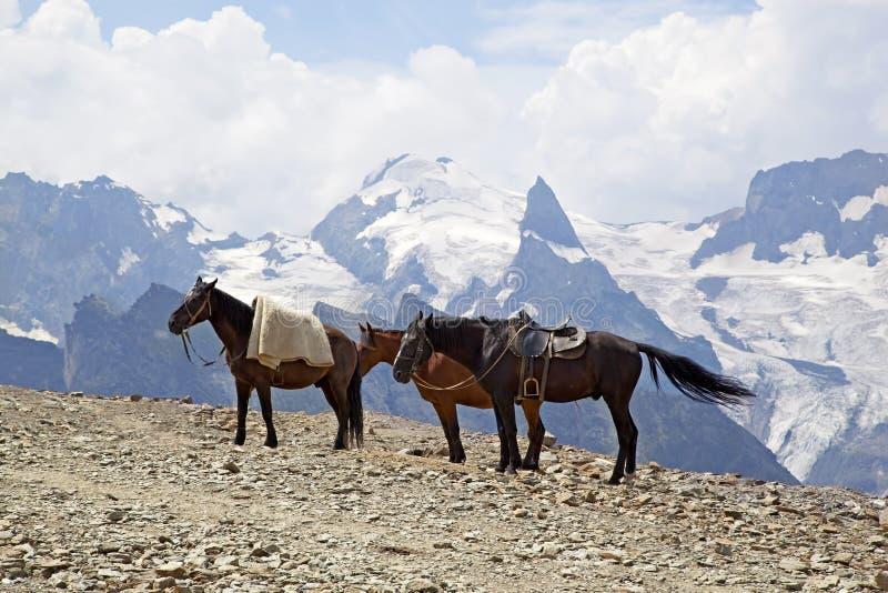 在山上面的马 库存图片