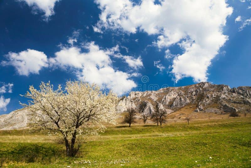 在山下的春天树 免版税库存图片