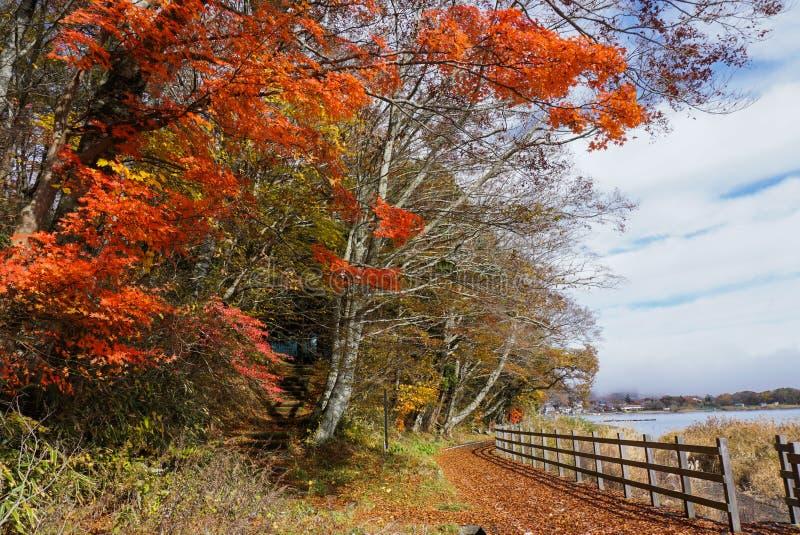 在山中湖的走的足迹日本的秋天季节的 库存照片