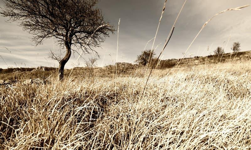 在山休耕麦田的偏僻的树 库存照片