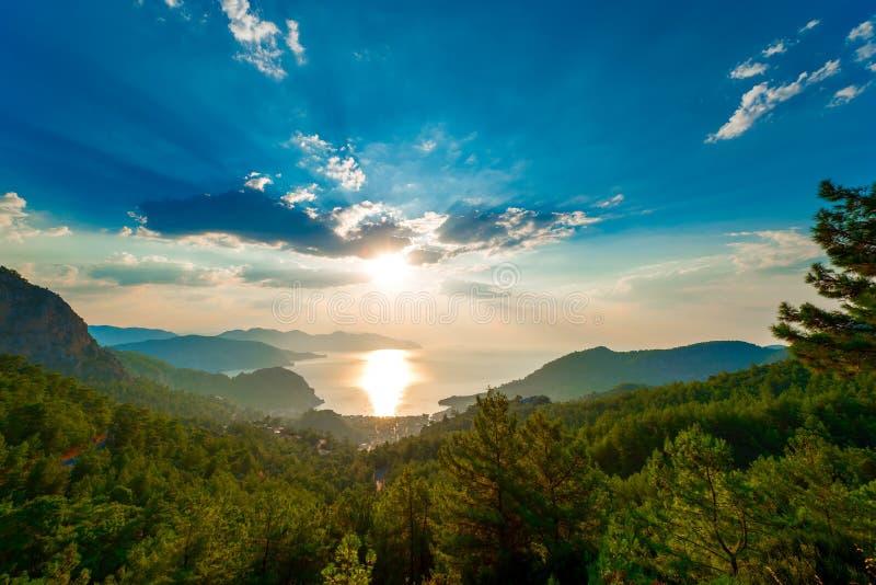 在山和朝阳的杉树 库存照片
