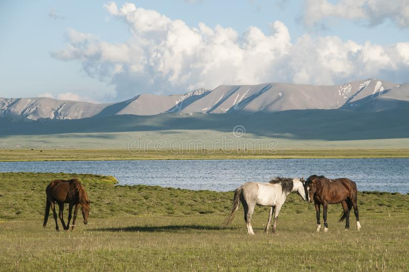 在山和SongkA¶ll湖背景的马  免版税库存照片
