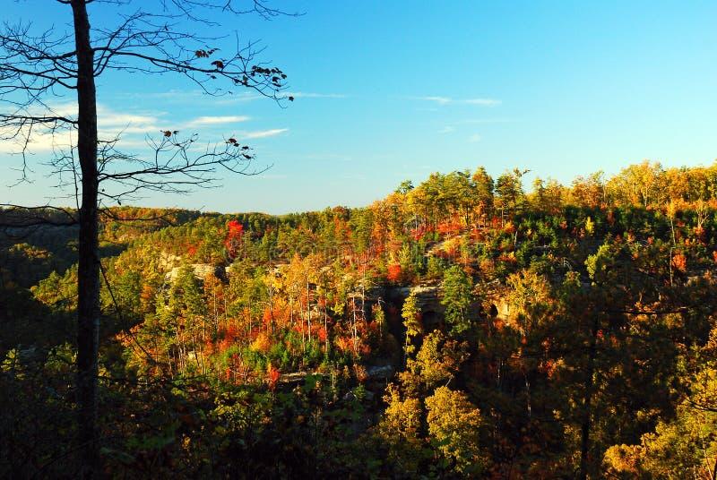 在山土坎的秋天颜色 免版税库存图片