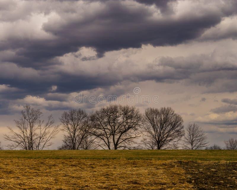 在山坡的新罕布什尔贫瘠树与黑暗的云彩 库存照片
