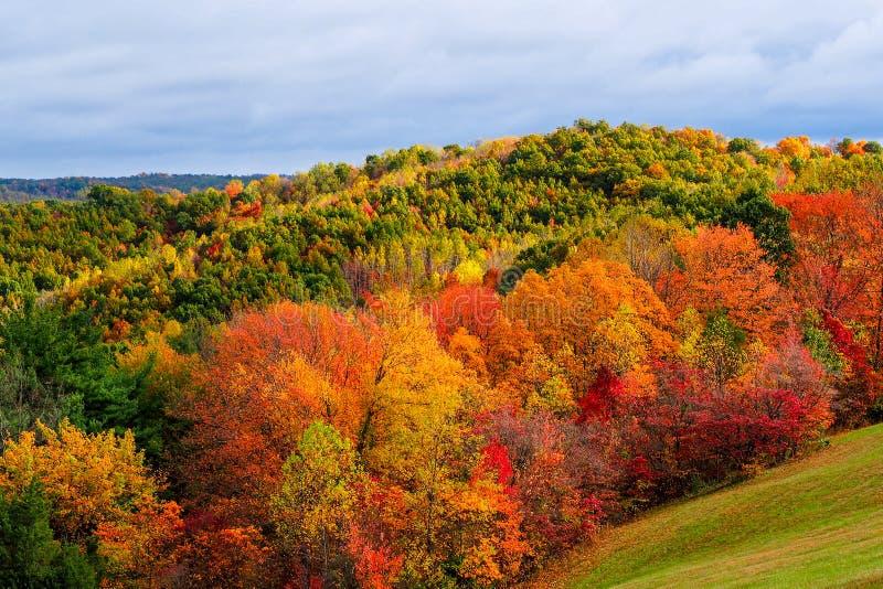 在山坡的秋天 库存照片