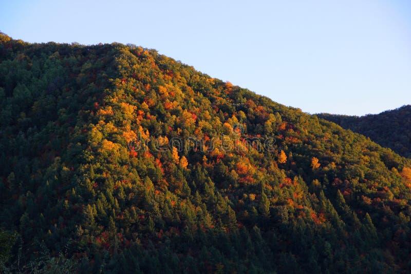 在山坡的结构树 免版税库存照片