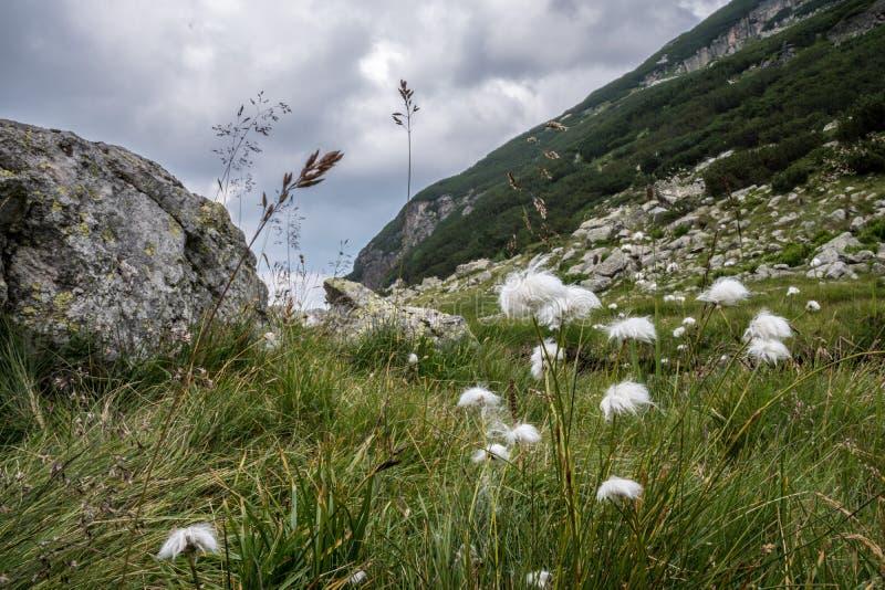 在山坡的花 图库摄影