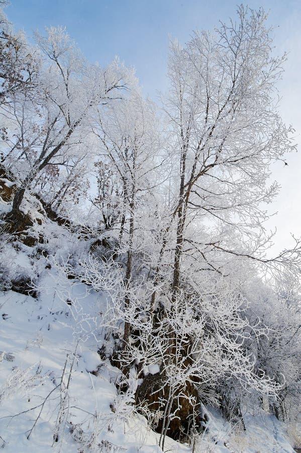 在山坡的软的霜 库存图片