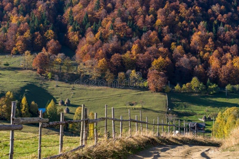 在山小山的秋天树 免版税库存照片