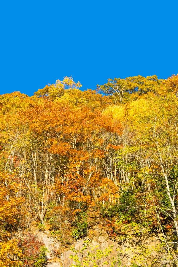 在山山坡II的精采秋天树 免版税库存图片
