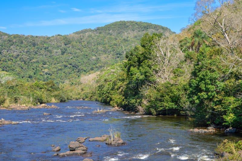 在山松里奇森林储备,伯利兹附近的风景 免版税库存照片